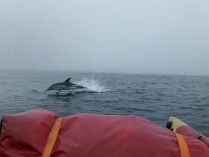 Click image for larger version  Name:Best dolphin picture.jpg Views:170 Size:28.6 KB ID:32091