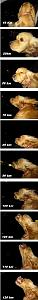Click image for larger version  Name:doggy.jpg Views:279 Size:99.3 KB ID:32222