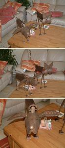 Click image for larger version  Name:pets.jpg Views:294 Size:122.3 KB ID:4133