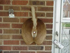 Click image for larger version  Name:reneck_doorbell (600 x 450).jpg Views:198 Size:75.1 KB ID:6045