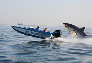 Click image for larger version  Name:shark 2.jpg Views:355 Size:154.5 KB ID:8996