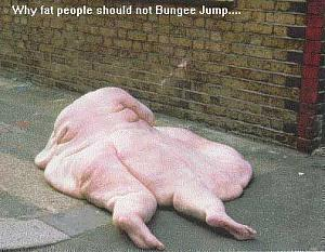 Click image for larger version  Name:fat.jpg Views:233 Size:34.8 KB ID:9385